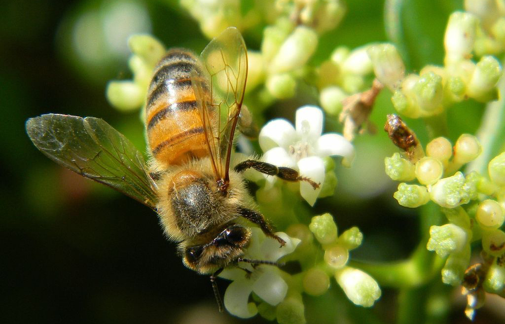 New Study Predicts Severe Declines for Coffee as Bees Die Off