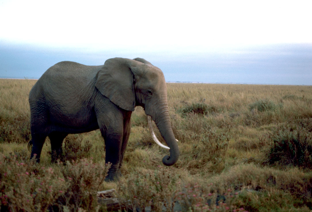 african essay topics biodiversity essay topics tough love parenting essay ilog