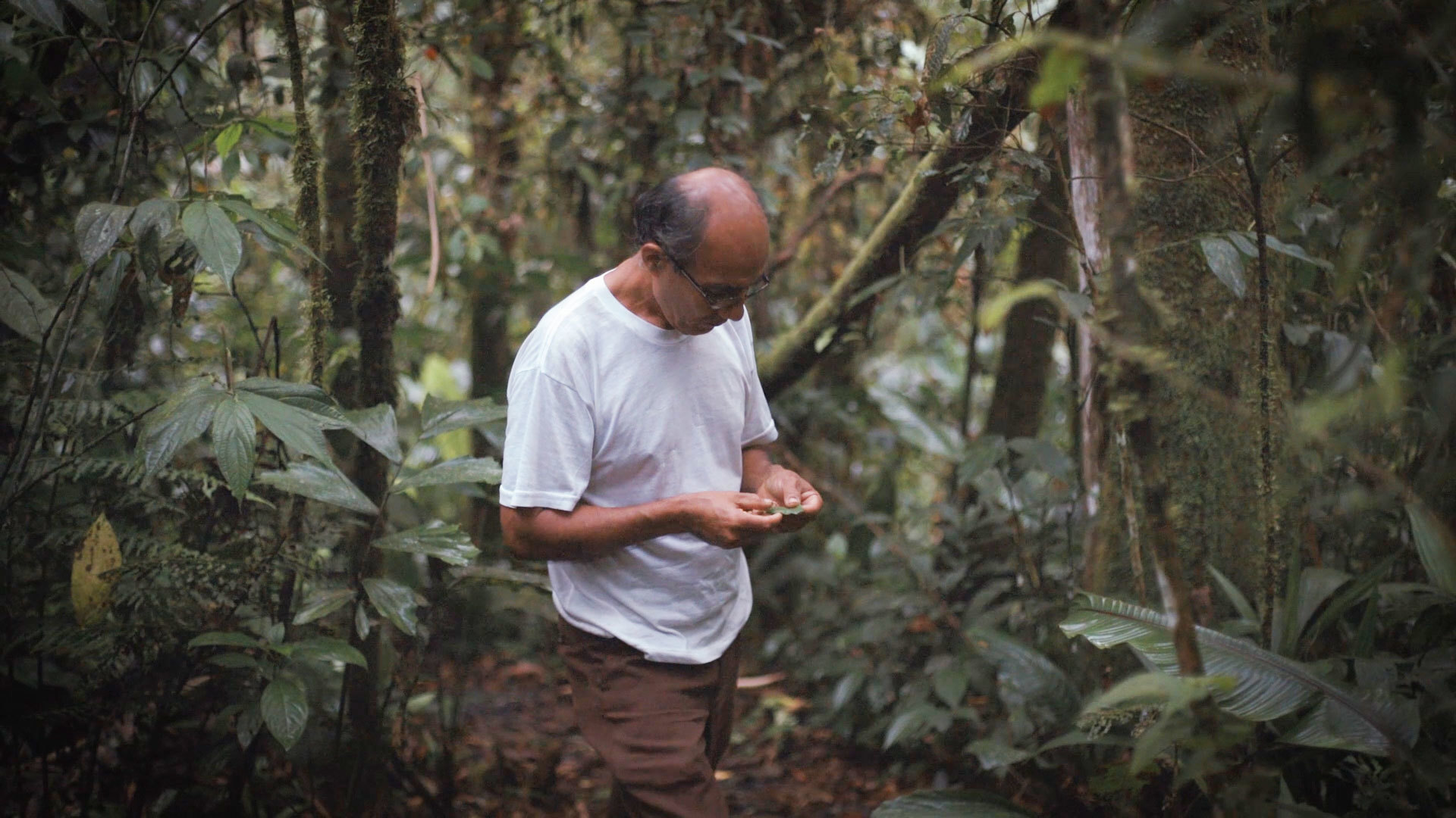 In Ecuador, One Man's Mission to Restore a Piece of the Rainforest ...