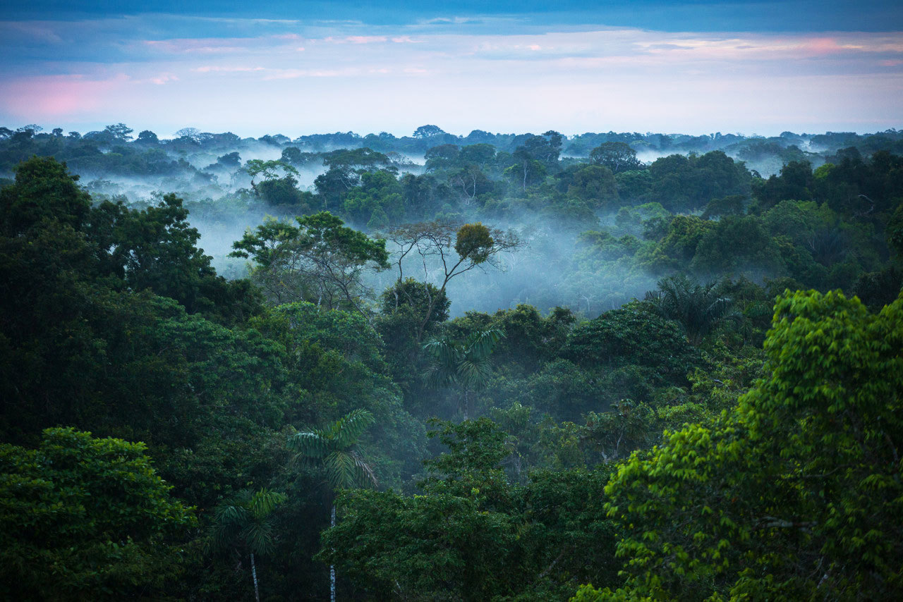 Lessons Learned from Centuries of Indigenous Forest Management