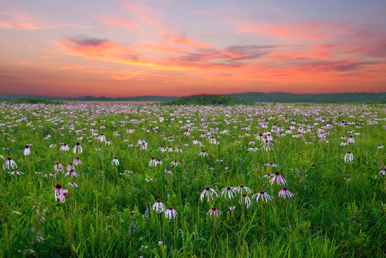 Forgotten Landscapes: Bringing Back the Rich Grasslands of the