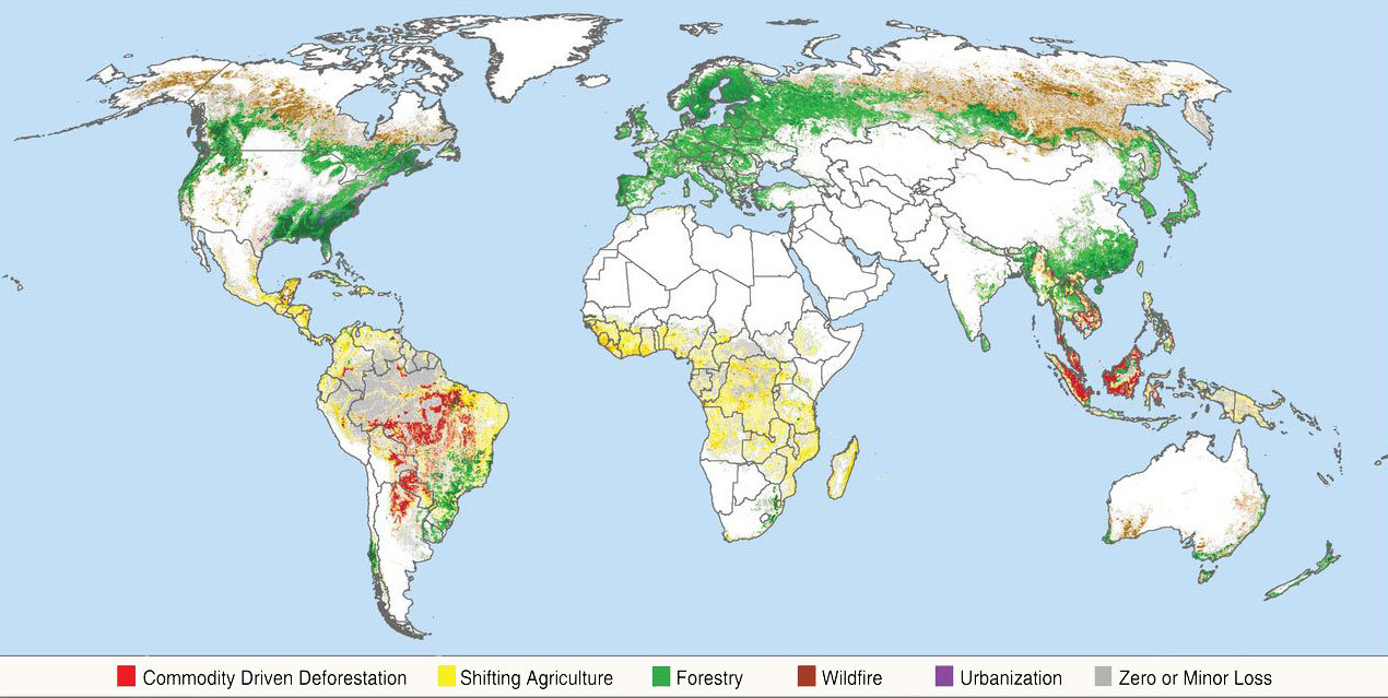 Conflicting Data: How Fast Is the World Losing its Forests?   Yale