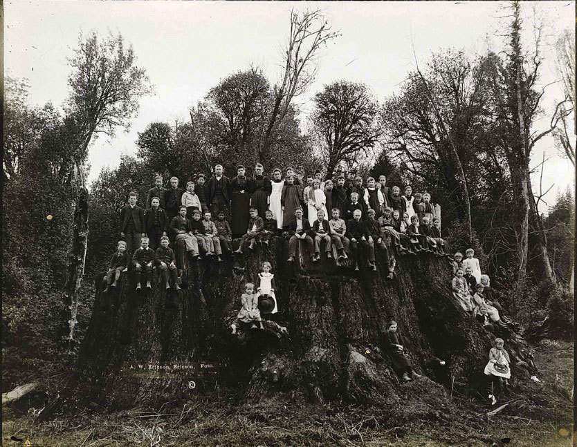 Arborists Have Cloned Ancient Redwoods From Their Massive Stumps