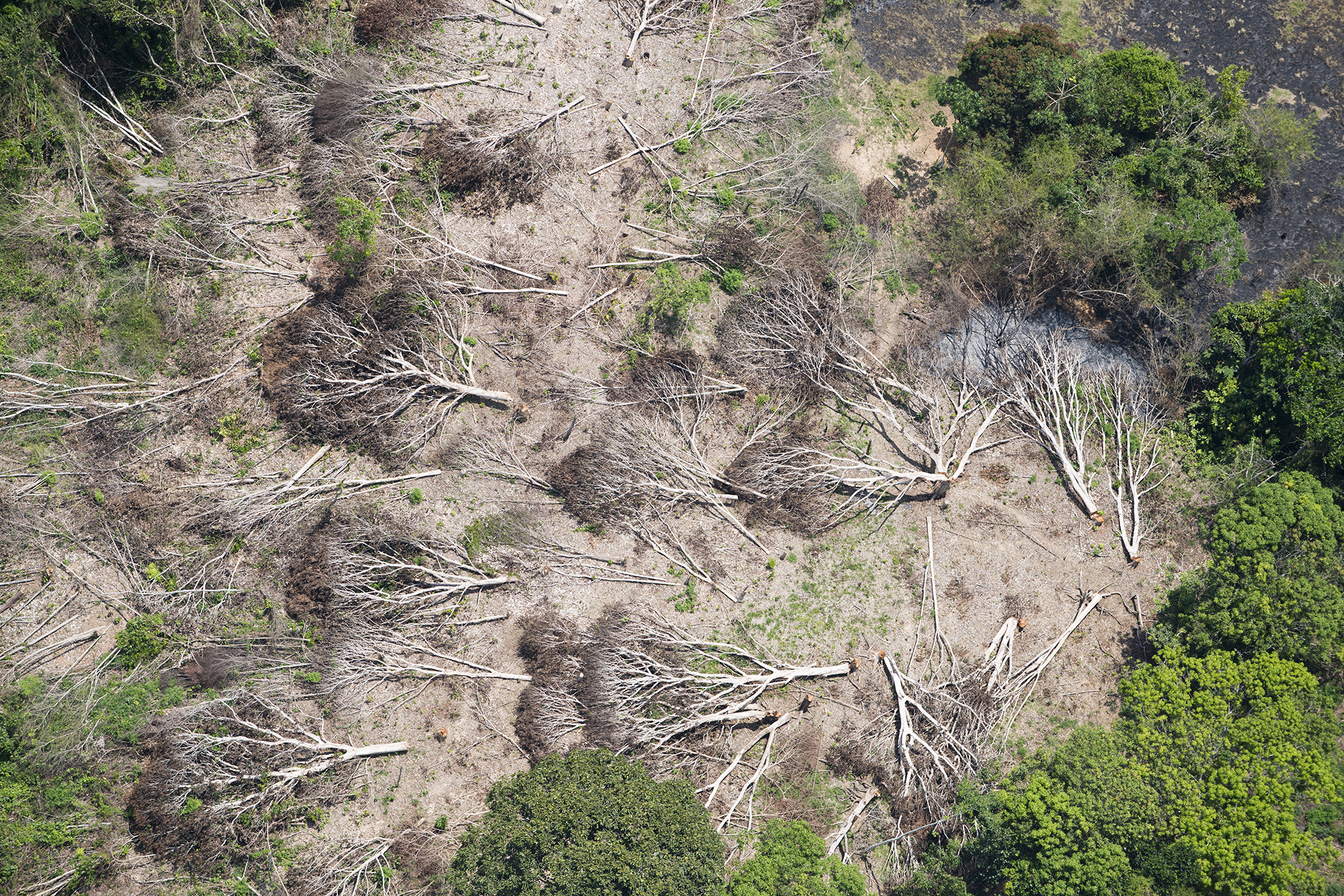 Business As Usual A Resurgence Of Deforestation In The