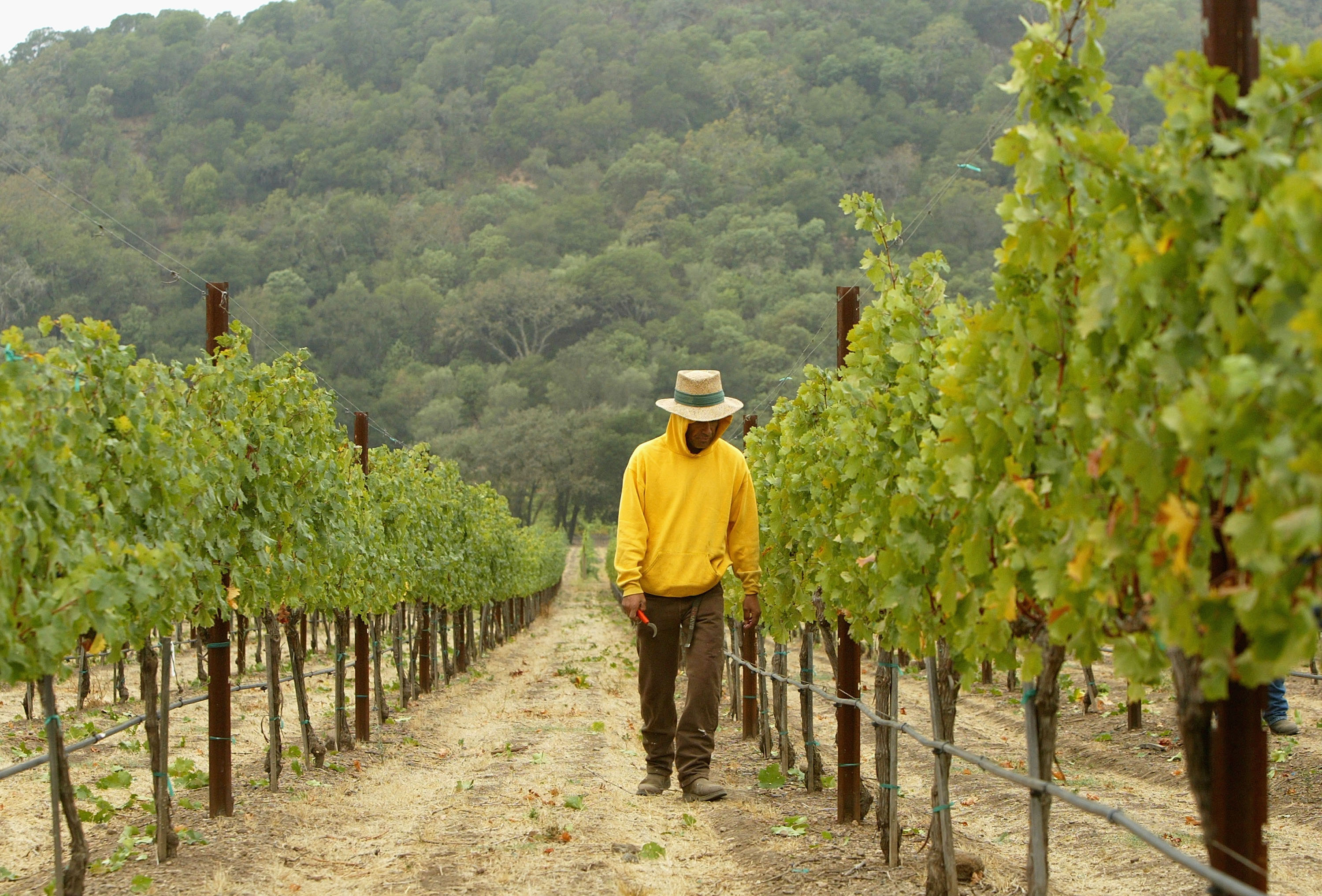 In Napa Valley, Vineyards and Conservationists Battle for the Hills