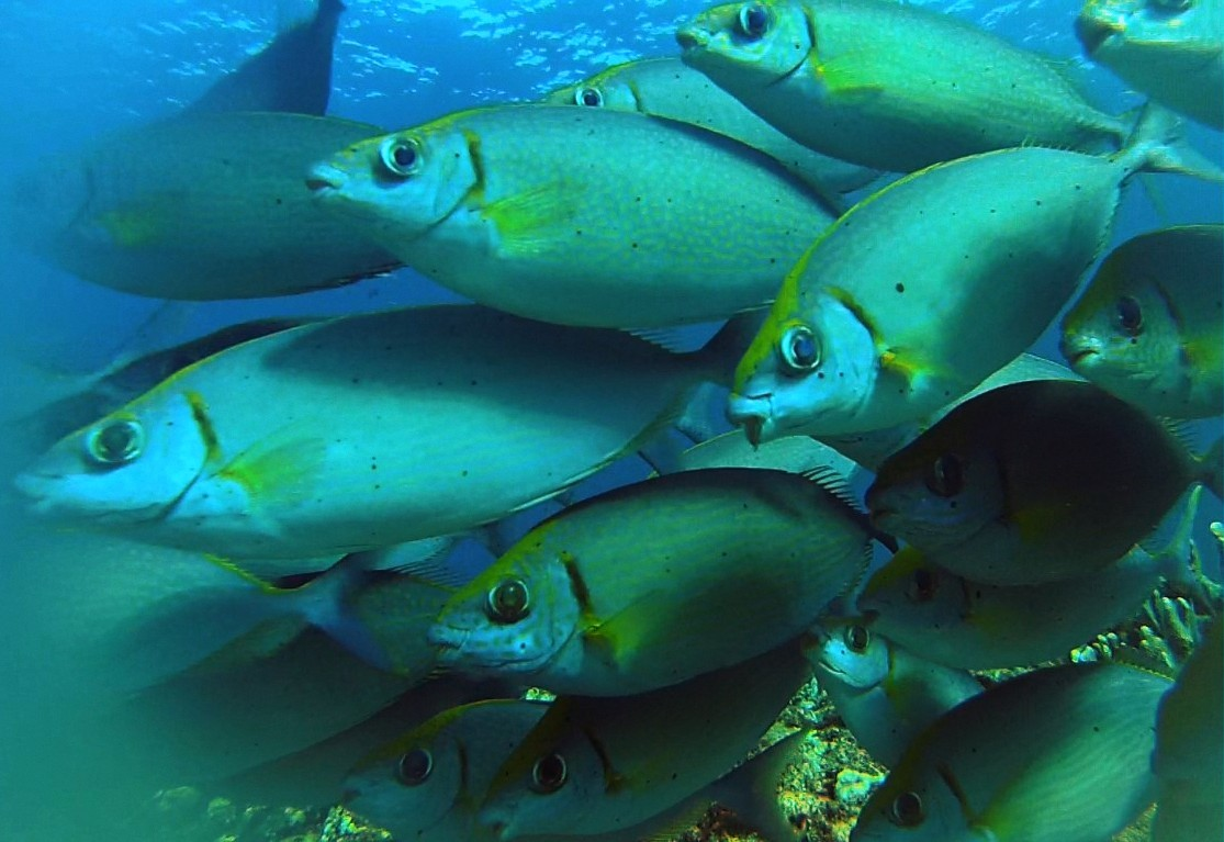 Feeling the Heat: How Fish Are Migrating from Warming Waters
