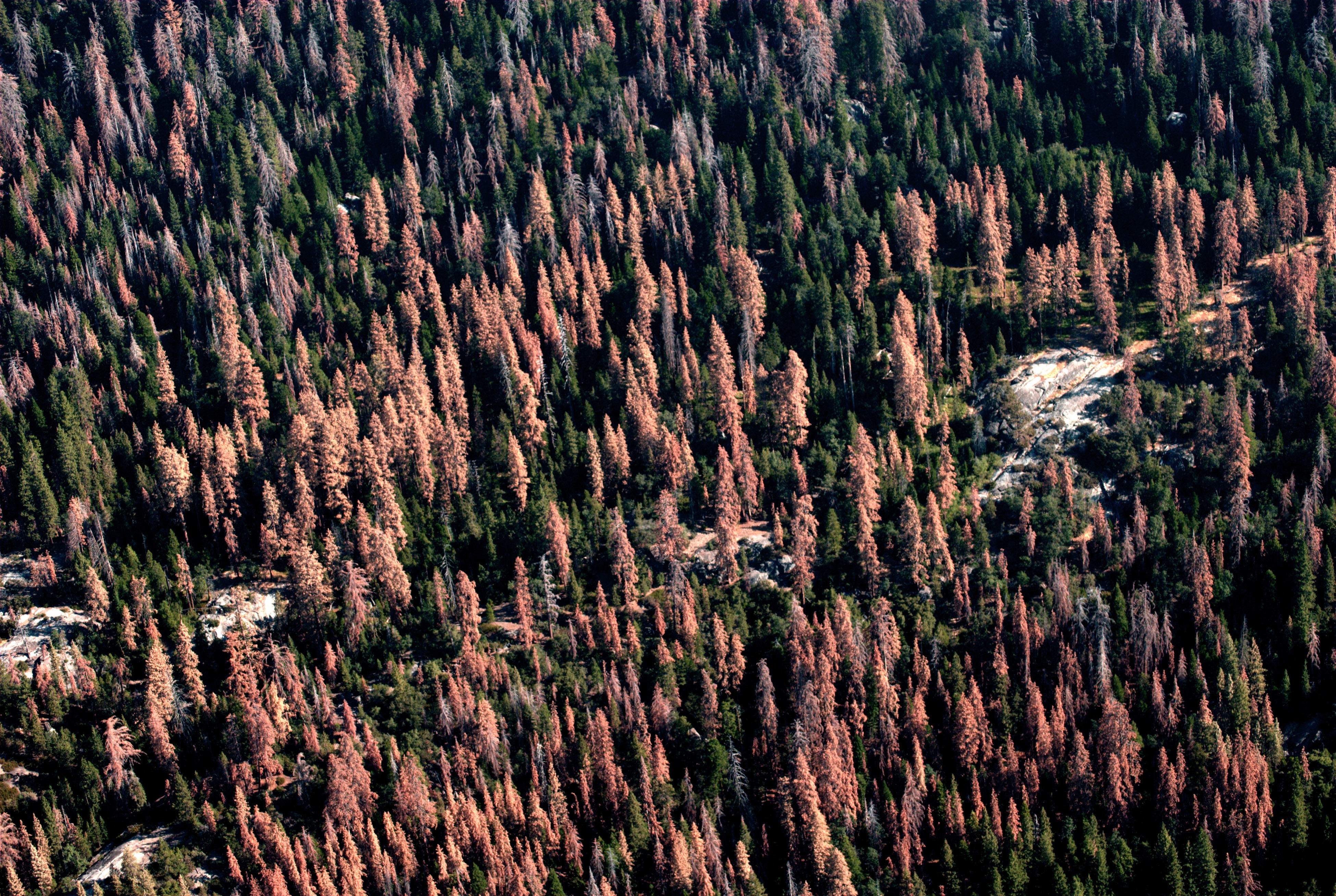 Colorado Mountain School >> Small Pests, Big Problems: The Global Spread of Bark Beetles - Yale E360