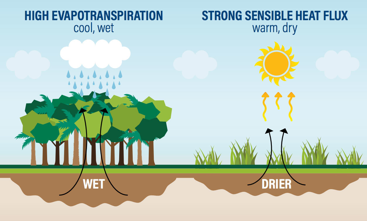 Trees pull water from the ground and release water vapor through their leaves, generating atmospheric rivers of moisture.