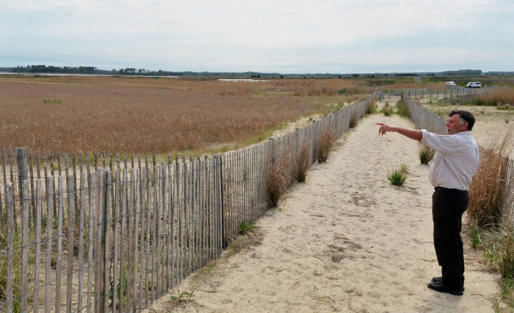 marshland, a fence and a person standing pointing