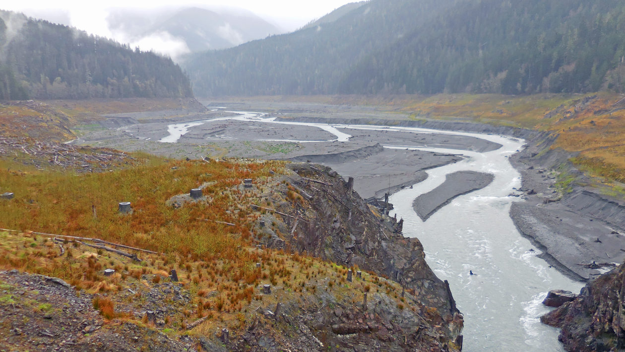 Elwha-River-revegetation