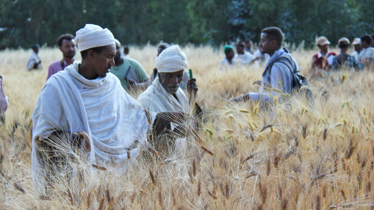 How Crowdsourcing Seeds Can Help Farmers Adapt to Climate Change