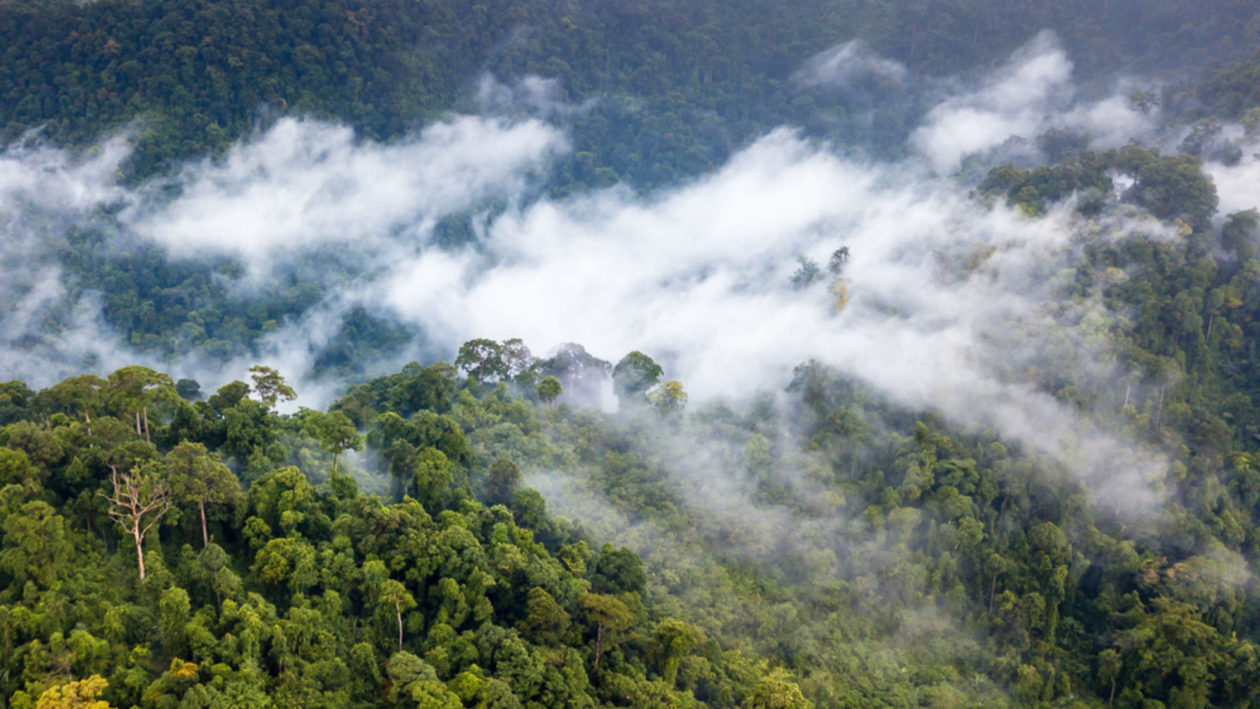 Rivers in the Sky: How Deforestation Is Affecting Global Water Cycles