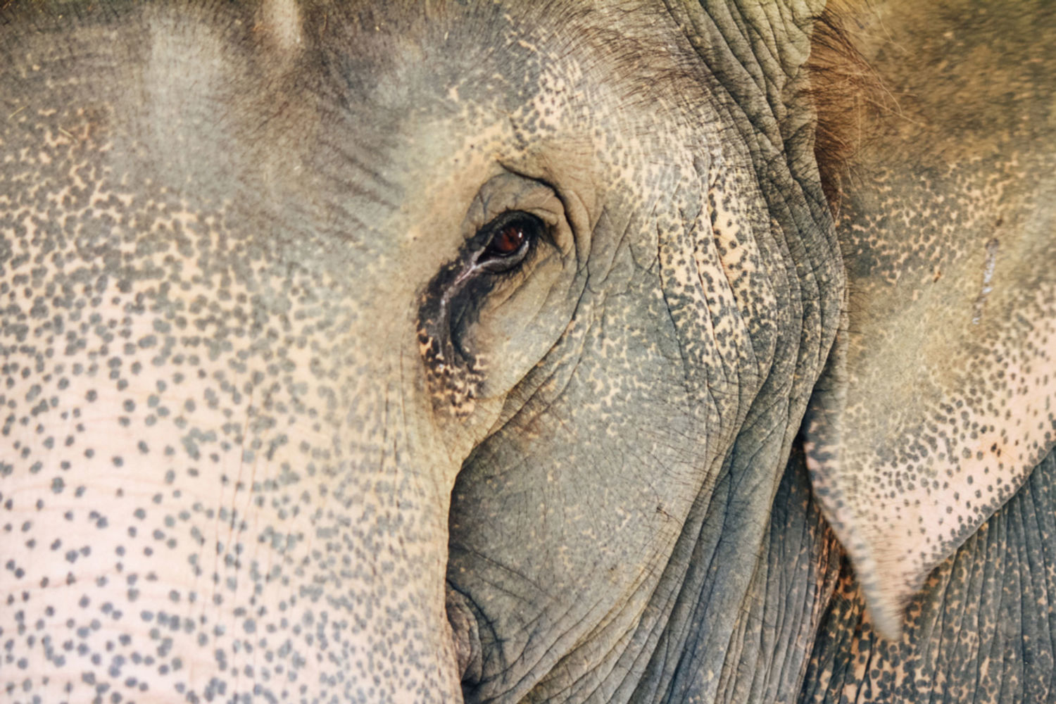 Understanding How Elephants Think Is Key to Protecting ...