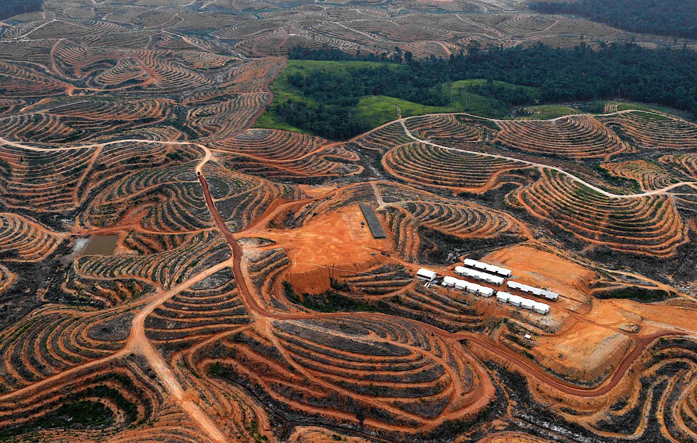 Vanishing Borneo Saving One Of The World S Last Great