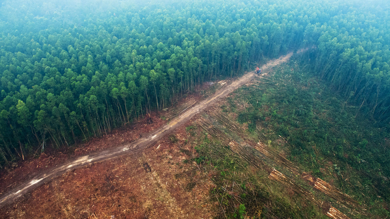 rivers in the sky how deforestation is affecting global water
