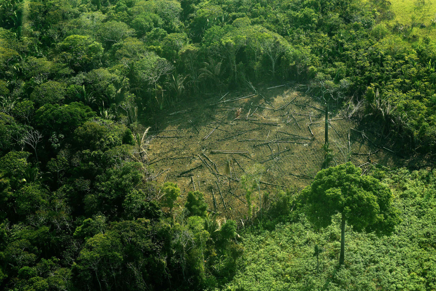 Conflicting Data: How Fast Is the World Losing its Forests ...