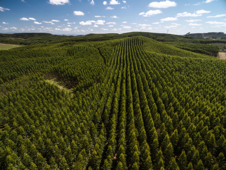 A tree plantation near São Paulo, Brazil.