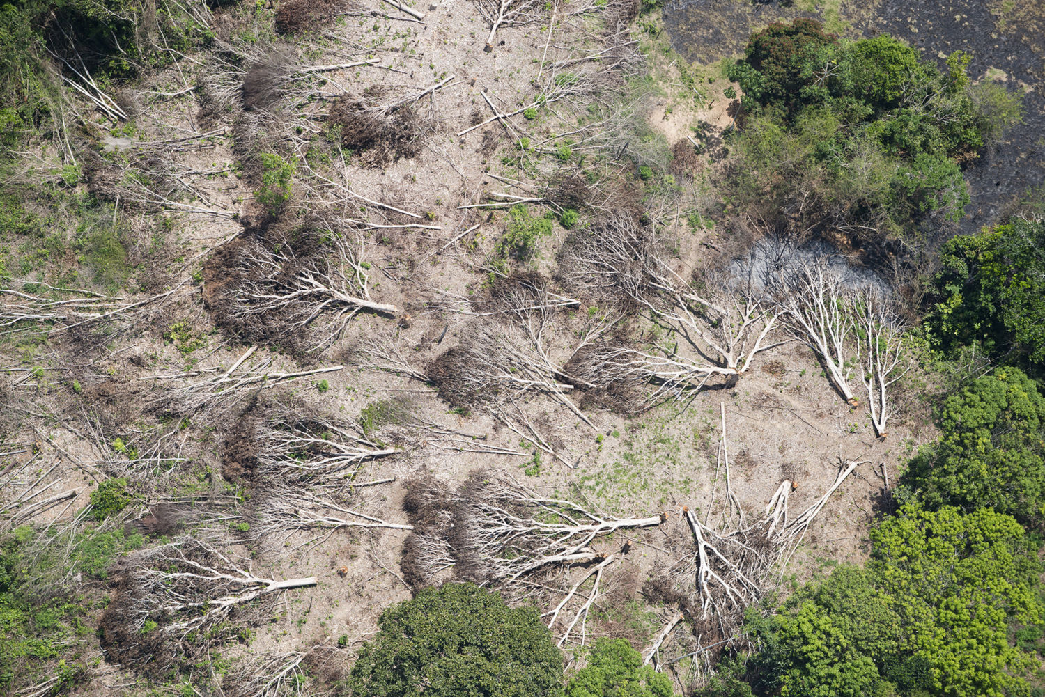 Business As Usual A Resurgence Of Deforestation In The Brazilian