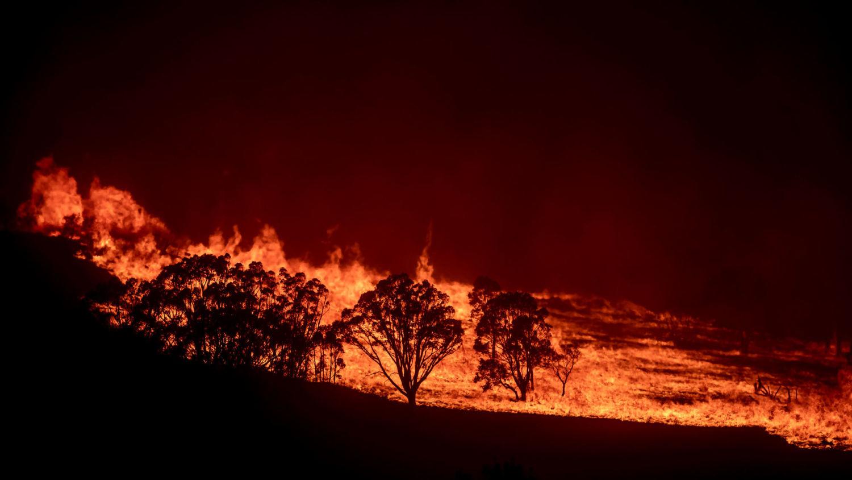 Image result for australia fire