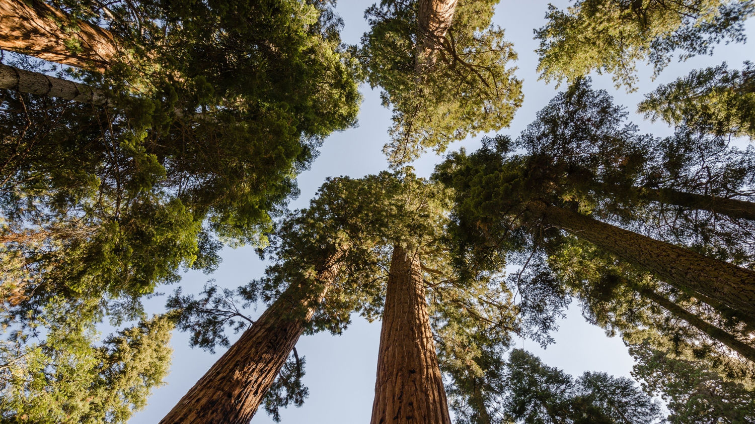 sequoia national park asian personals Sequoia national park is adjacent to kings canyon national park in asian singles single asian professionals single professionals young professional singles.