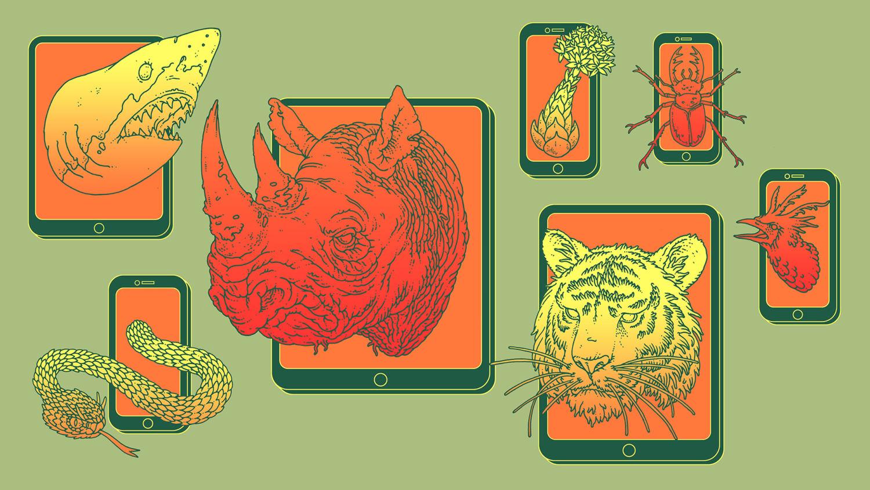 Animal Instincts Movie Watch Online unnatural surveillance: how online data is putting species