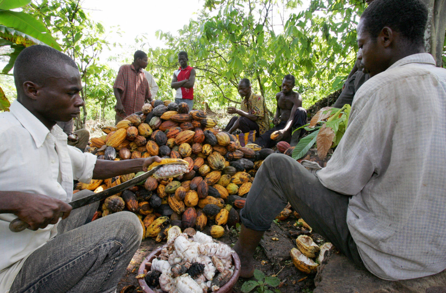 The Real Price of a Chocolate Bar: West Africa's Rainforests