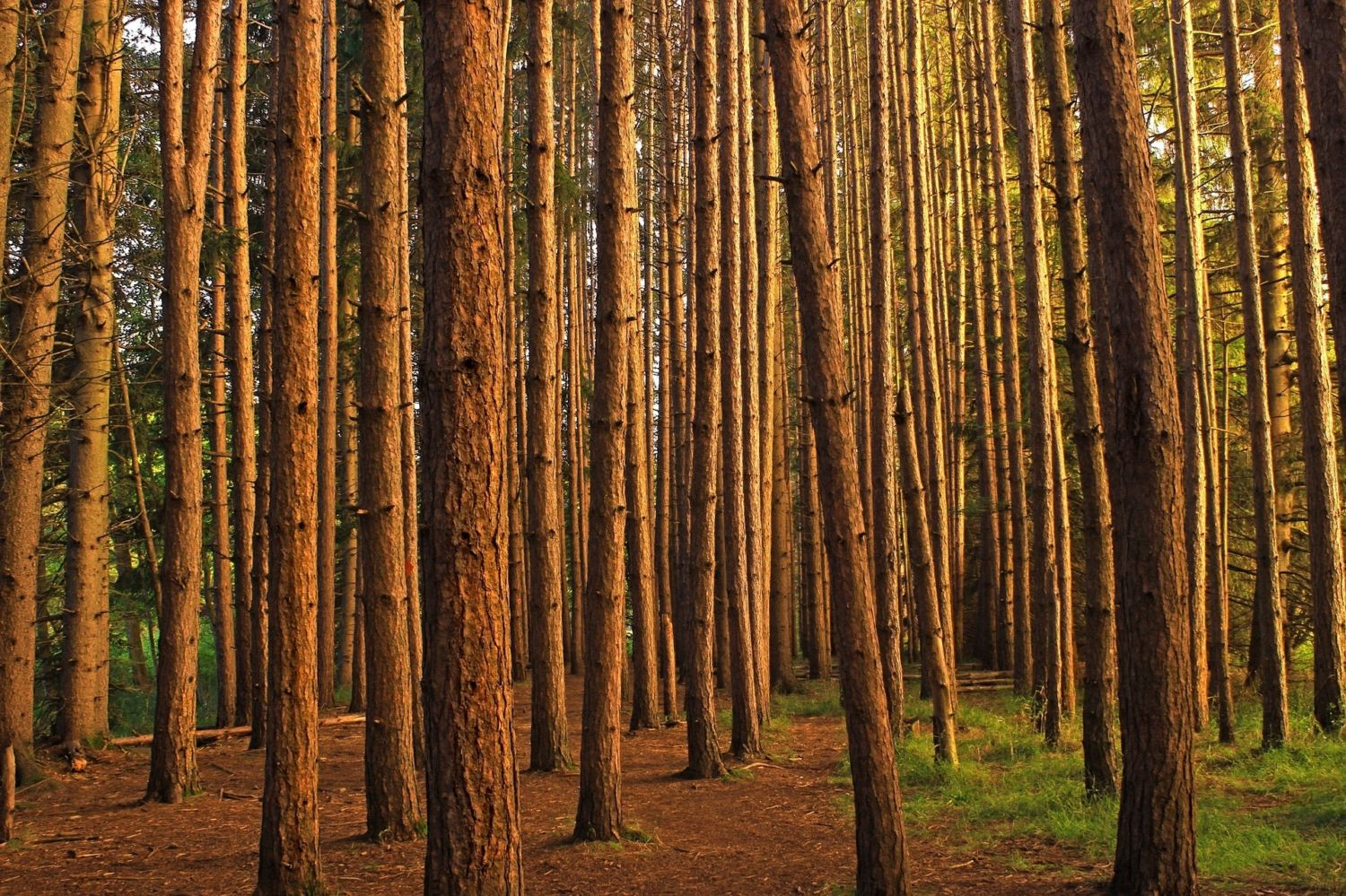 Scientists Discover a New Source of Methane: Tree Trunks ...