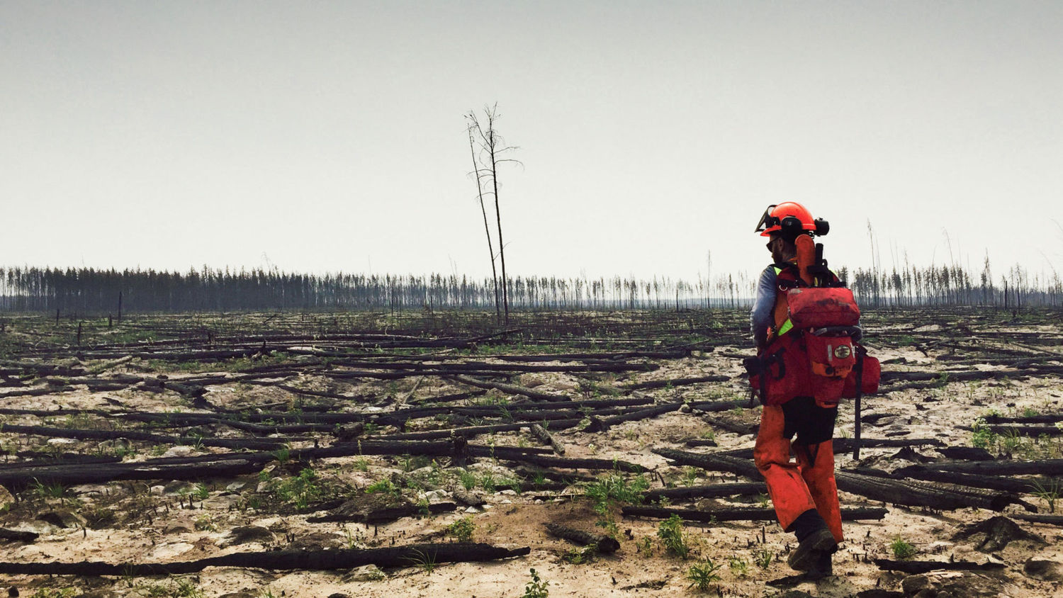 Does a Fire-Ravaged Forest Need Human Help to Recover