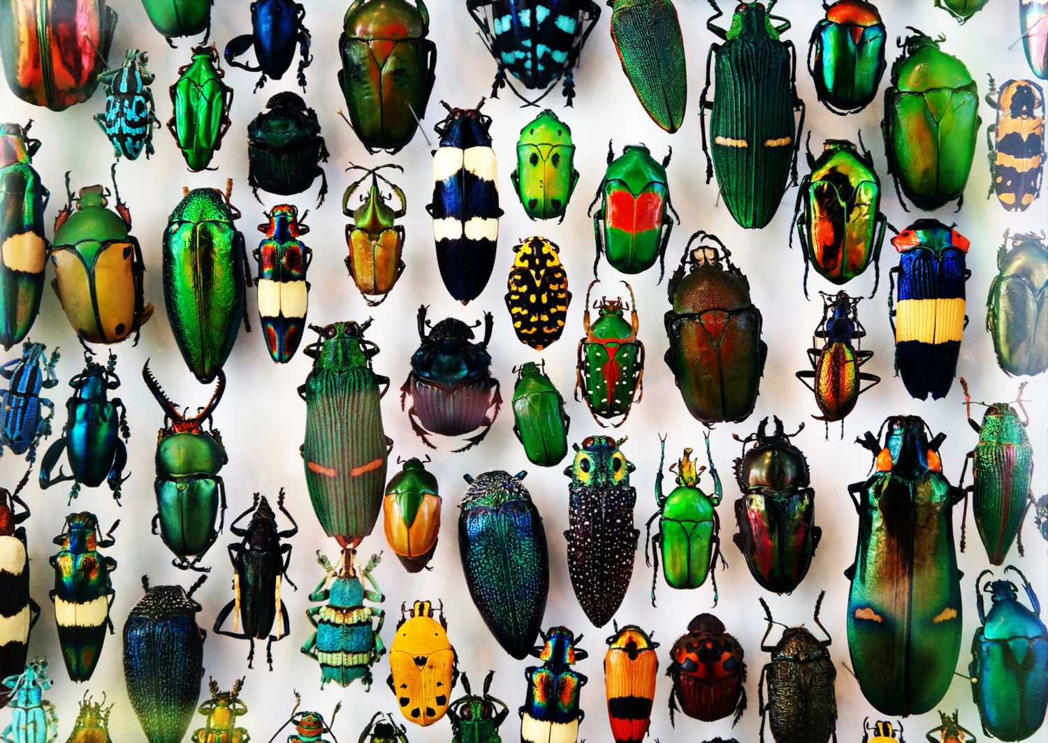 In Defense of Biodiversity: Why Protecting Species from