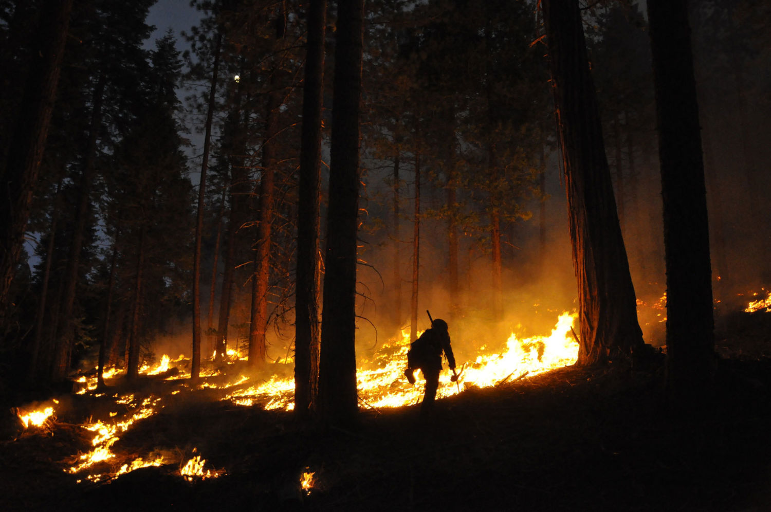 Fighting Fire with Fire: California Turns to Prescribed Burning
