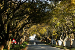 Johannesburg has an estimated 6 to 10 million trees, mostly non-native species brought in from around the world.