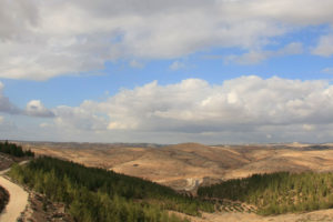 The Yatir Forest in the Negev desert.