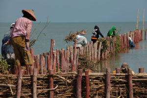 Villagers in the Demak district of Java, Indonesia, help to maintain natural wooden seawalls.