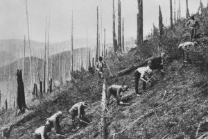 A Civilian Conservation Corps crew clears brush and plants seedlings in St. Joe National Forest in Idaho in the 1930s.