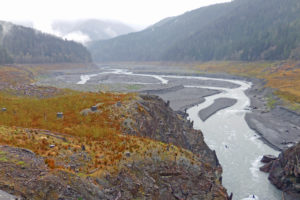 Vegetation is returning to this Elwha River valley in Washington state after two dams were removed.