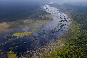 The Kerumutan Peat Swamp Forest in Sumatra.