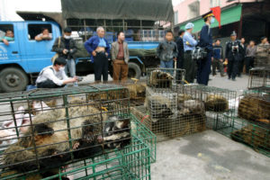 Chinese officials seized civet cats in a wildlife market in Guangzhou in 2004 to prevent the spread of the SARS virus.