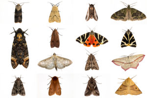 ​A composite image of moths trapped during an annual nighttime insect census in October 2013 in the U.K.