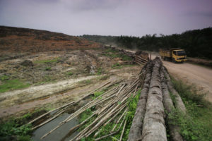 An area of forest in Indonesia that was cleared to make way for an oil palm plantation.