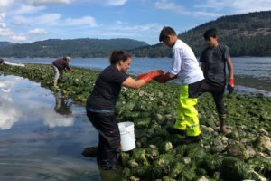 Swinomish tribal members from Washington state participate in a clam garden restoration in British Columbia.