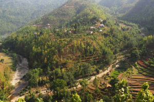Trees grow on former terraced rice fields in Gulmi District, Nepal.