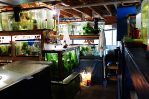 Fish tanks in the basement of a home in Erie, Colorado containing dozens of threatened species, including some that are extinct in the wild.