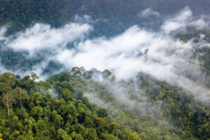 Moisture produced by the world's forests generates rainfall thousands of miles away.
