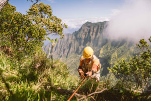 Botanist Steve Perlman rappels into the Kalalau Valley, a biodiversity hotspot on the Hawaiian island of Kauai.