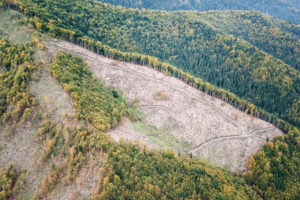 A logged area of a forest managed by the Forest Stewardship Council in Romania.
