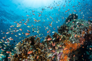 A coral reef near the Indonesian island of Bali.