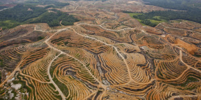 Forests cleared for oil palm plantations in Central Kalimantan, Indonesia.