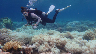A researcher near Orpheus Island, Australia confirms coral bleaching seen during aerial surveys last month.