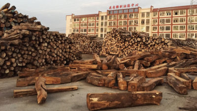 Stacks of rosewood at a timber market in Dongyang, China, a well-known hub for the illegal trade.
