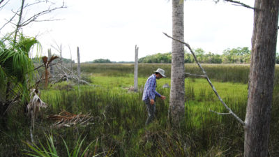 Ecologist David Kaplan surveys dying coastal trees in the Withlacoochee Gulf Preserve in Yankeetown, Florida.